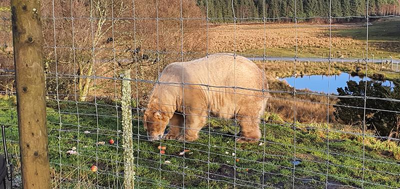 Highland Wildlife Park polar bear © 2020 Scotiana